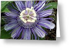 Pristine Passion Flower Greeting Card
