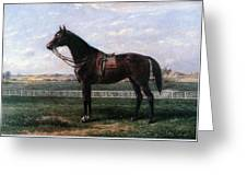 Prize Horse Greeting Card
