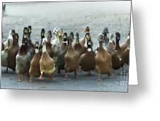 Professional Ducks 2 Greeting Card