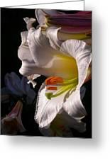 Profile Lilium Regale Greeting Card