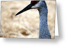 Profile Of A Sand Hill Crane Greeting Card