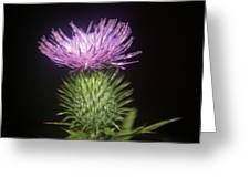 Profile Of Pruple Thistle Greeting Card