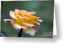Profile View Yellow And Pink Rose Greeting Card