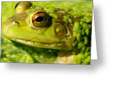 Profiling Frog Greeting Card