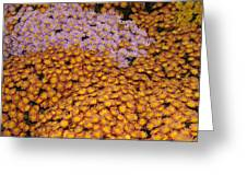 Profusion In Yellows Pinks And Oranges Greeting Card