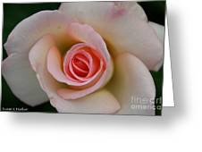 Promise Of Pink Greeting Card