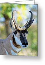 Pronghorn Antelope Portrait Greeting Card