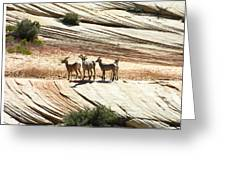 Pronghorn Deer Greeting Card
