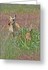 Pronghorn Doe And Fawn Greeting Card