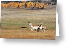 Pronghorn In The Park Greeting Card