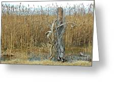 Proof Greeting Card
