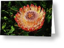 Protea Flower 2 Greeting Card