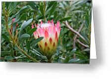 Protea Pride Greeting Card