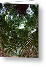 Protecting Palms Greeting Card