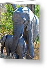 Protective Mother Elephant In Kruger National Park-south Africa Greeting Card