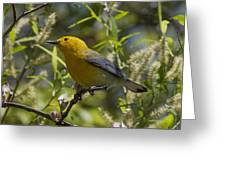 Prothonotary Warbler Dsb220 Greeting Card
