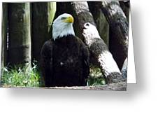 Proud Eagle Greeting Card