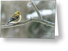 Proud Finch Greeting Card