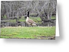 Proud Goose Greeting Card