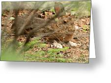 Proud Hare Greeting Card