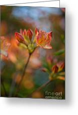 Proud Orange Blossoms Greeting Card
