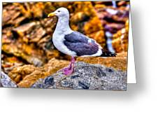 Proud Thayer Gull Greeting Card