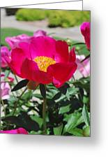 Proud To Be Pink Greeting Card by Billie Colson
