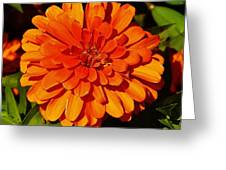 Proven Winners Flower Greeting Card