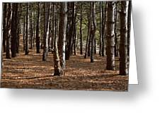 Provin Trails Park Forest Greeting Card