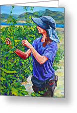 Pruning The Pinot Greeting Card