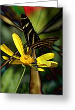 Psychadelic Zebra Butterfly Greeting Card