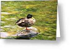 Psychedelic Duck  Greeting Card