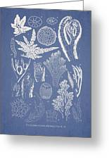 Pterosiphonia Fibrillosa Greeting Card
