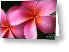 Pua Lei Aloha Cherished Blossom Pink Tropical Plumeria Hina Ma Lai Lena O Hawaii Greeting Card