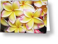 Pua Melia Greeting Card