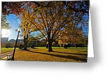 Public Garden Fall Tree Greeting Card