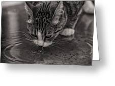 Puddle Drinking Kitty Greeting Card