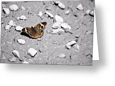 Puddling Butterfly 8766 Greeting Card