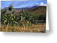 Puerto Rico Cayey Mountains Near Salinas Greeting Card