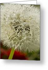 Puff Dandelion Greeting Card