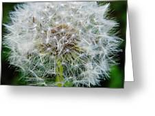 Puff The Dandelion Greeting Card