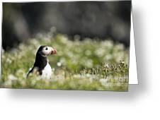 Puffin In Sea Campion Greeting Card