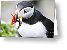 Puffin With Fish Greeting Card