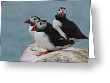 Puffins  Greeting Card by Peter Skelton