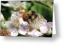 Puffy Bee Greeting Card