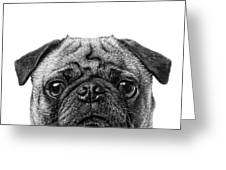 Pug Dog Square Format Greeting Card