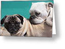 Pug Love Greeting Card by DerekTXFactor Creative