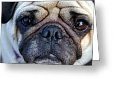 Pug Mug Greeting Card