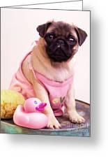 Pug Puppy Bath Time Greeting Card