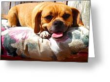 Puggle Lounging Greeting Card